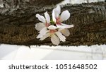 Closeup View Of A Flower...