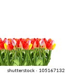bunch of tulips isolated on a... | Shutterstock . vector #105167132