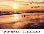 Dogs Run Along The Ocean Beach...