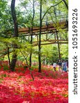 "Small photo of HIDAKA CITY, SAITAMA / JAPAN - SEPTEMBER 24 2017 : ""Aiai bridge"" of ""Kinchakuda"" in which Red spider lily blooms. Hidaka City, Saitama Prefecture, Japan."