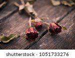 Dried Red Rose  Dead Red Rose...