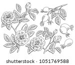 dog rose flower berry plant... | Shutterstock .eps vector #1051769588