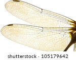 Dragonfly Wings Isolated On...
