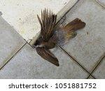accidental death of an avian   Shutterstock . vector #1051881752