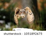 Brown Owl With Huge Red Eyes...