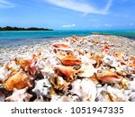 los roques  wonderful... | Shutterstock . vector #1051947335