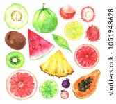hand painted exotic fruits set. ... | Shutterstock . vector #1051948628