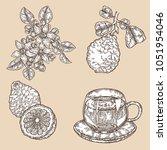 bergamot fruits  flowers ... | Shutterstock .eps vector #1051954046