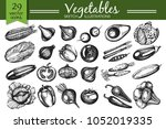 vector set with hand drawn... | Shutterstock .eps vector #1052019335