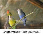 parrot in cage | Shutterstock . vector #1052034038