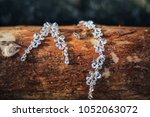 silver wedding ring and crystal ... | Shutterstock . vector #1052063072