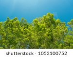 fresh green tree in public park ... | Shutterstock . vector #1052100752