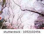 sakura garden at  ueno park... | Shutterstock . vector #1052102456