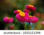 Colorful Flowers Bloom In The...