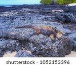 marine iguana on santiago... | Shutterstock . vector #1052153396