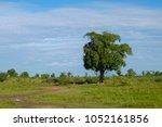 photos of the minneriya... | Shutterstock . vector #1052161856