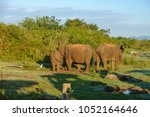 image of the elephants of the... | Shutterstock . vector #1052164646