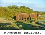 image of the elephants of the... | Shutterstock . vector #1052164652