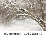 winter park trees in the snow 1 | Shutterstock . vector #1052168642