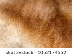 fur  skin  ox hair. animal. won.   Shutterstock . vector #1052174552