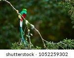 resplendent quetzal ... | Shutterstock . vector #1052259302