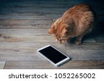 Small photo of Ginger cat looks curious on a tablet computer who lies on a wooden floor.
