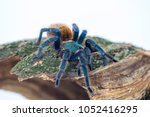 close up of a greenbottle... | Shutterstock . vector #1052416295