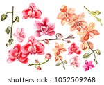 beautiful watercolor set with... | Shutterstock . vector #1052509268