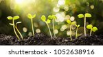 growing seeds on natural sunny... | Shutterstock . vector #1052638916