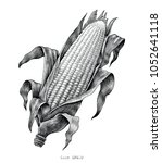 corn hand drawing vintage... | Shutterstock .eps vector #1052641118