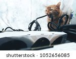 Stock photo ginger cat tries to bite the wires on mining computer open stand 1052656085