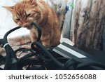 Stock photo ginger cat tries to bite the wires on mining computer open stand 1052656088