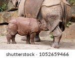 baby rhino suckling | Shutterstock . vector #1052659466