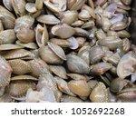 sea shell on shelf in market  | Shutterstock . vector #1052692268