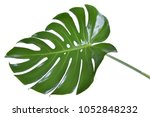 monstera leave texture tropical ... | Shutterstock . vector #1052848232