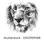 hand sketch detail of a lion's... | Shutterstock .eps vector #1052909408
