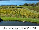let the vineyards be fruitful.  ... | Shutterstock . vector #1052918468