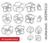 vector set with outline pansy... | Shutterstock .eps vector #1052992112