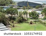 Small photo of Darwin,Northern Territory/Australia-March 18,2018: Fallen tree aftermath from Cyclone Marcus with waterfront pool and Convention Centre in Darwin, Australia