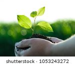 planting and watering seedlings ... | Shutterstock . vector #1053243272