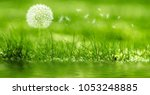 dandelion blows the wind   Shutterstock . vector #1053248885