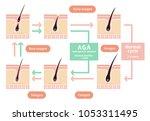 comparative illustration of...   Shutterstock .eps vector #1053311495