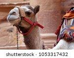 Close up of a camel in petra...