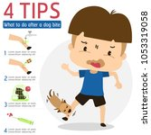 what to do after a dog bite... | Shutterstock .eps vector #1053319058