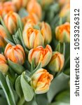 tulips of orange color closed.... | Shutterstock . vector #1053326312