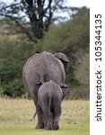 Elephant Mother With Young...