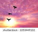 Stock photo silhouette birds and blurred sunset sky background on animals wildlife concept 1053449102