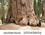 giant sequoia and the tourist... | Shutterstock . vector #1053458456