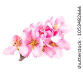 several pink almond flowers on... | Shutterstock . vector #1053482666