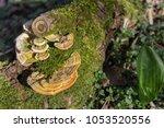 Mushrooms On A Tree Trunk....